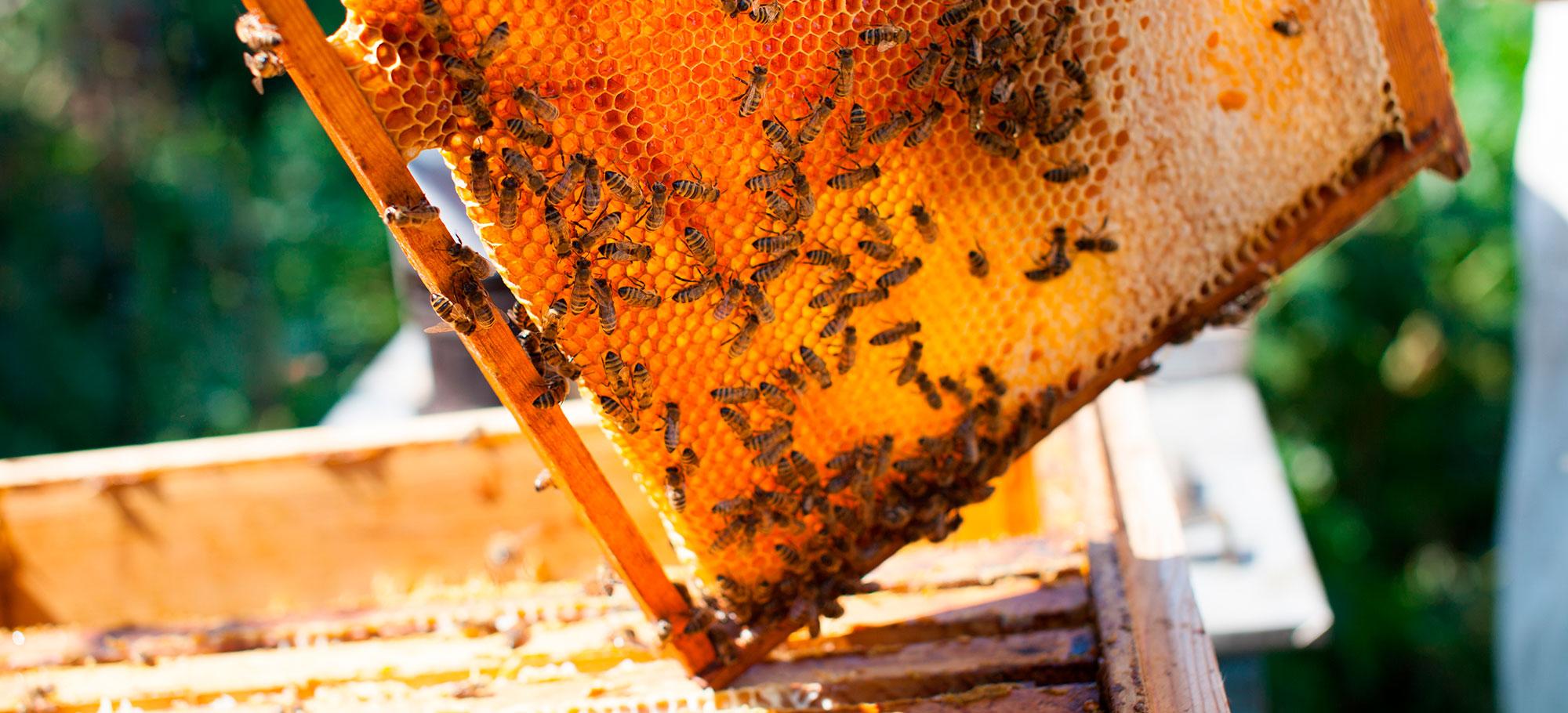 Miel española 100% natural